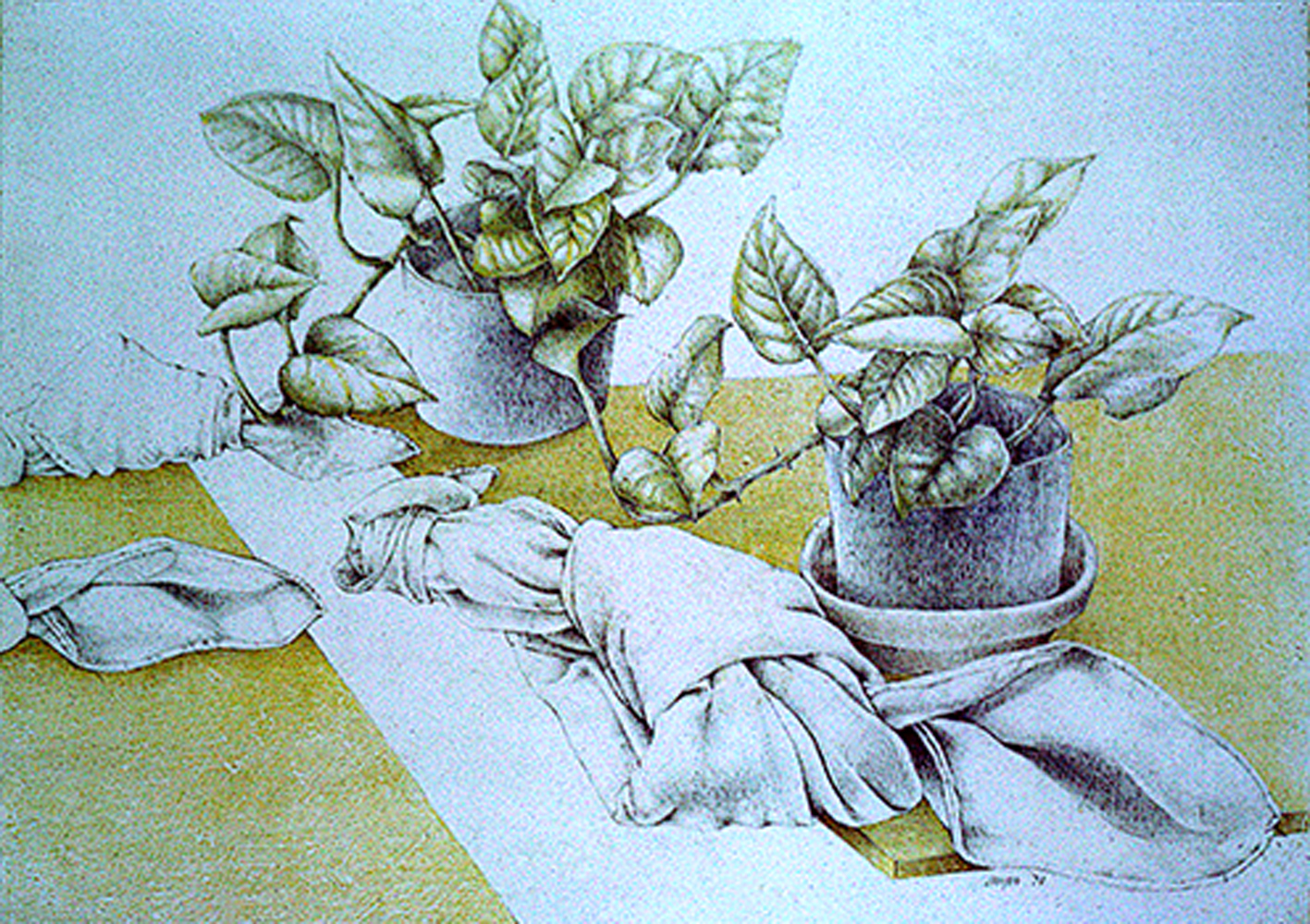 "Knots and Plants <span>Graphite and colored pencil on gesso<br> 9"" x 12"" </span>"